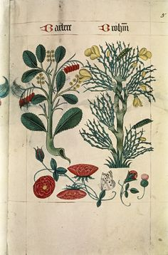 """Barberry and Broom, Butterfly, Thistle, Poppies, in """"The Tudor Pattern book"""", ca. 1520/30, Ms Ashmole 1504"""