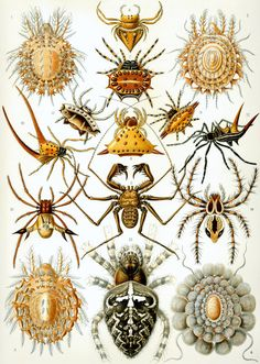 SpidersGold treasury1880 Antique SPIDER by arttour on Etsy, $10.00