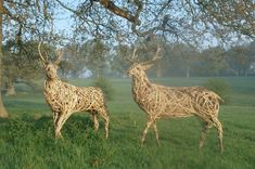 Willow Stags at Stock Gaylard