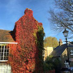 Favourite corner in Chiswick