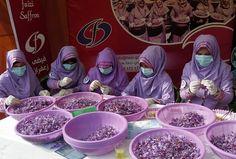 Herat, Afganistan.  Naised teevad safrani lillefestivalil safrani tootmiseks.  Afganistani narkootiliste ainete ministeeriumi andmetel on Herati lääneosas provintsis 90% endistest unimagunaariumitootjatest vürtsi kasvanud.