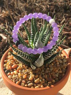 Purple lokai bracelet on a succulent