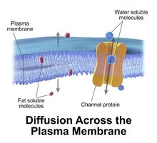 Cell membrane - Wikipedia, the free encyclopedia