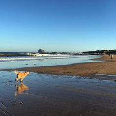 Bass rock and mirror dog #christmas #beach