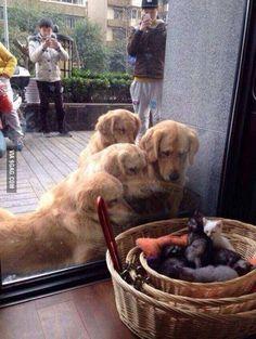 We want a kitten