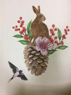 #Daisyfletcher #Birdtopia Daisy, Bird, Animals, Animais, Animales, Animaux, Daisy Flowers, Birds, Daisies