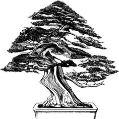 Used to reposition trunks and branches. Bonsai wire is a temporary aspect of training bonsai trees. Kinds to use.