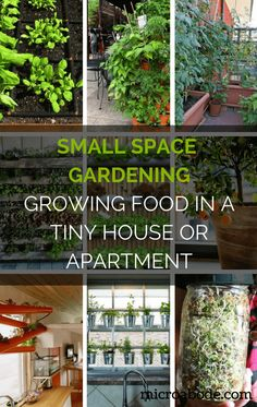 Small Space Gardening: Growing Food in a Tiny House or Apartment | Follow these small space gardening ideas to grow your own healthy and organic food outside or inside your home even in the tiniest of places.