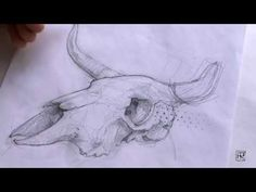 Video by podessto. Cow skull drawing #tuttorial, #pencil, #sketch, #drawing, #cow, #skull, #draw