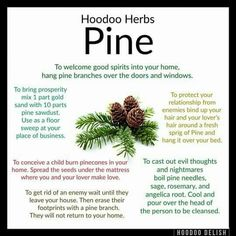 Hoodoo Tips for using Pine Hoodoo Spells, Magick Spells, Voodoo Hoodoo, Pagan Witch, Witches, Herbal Magic, Book Of Shadows, The Conjuring, Spelling