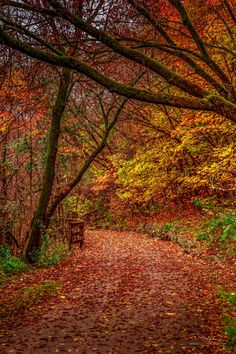 Artistic-realistic nature -  Fall Colours on 500px by Ralph Sobanski,...