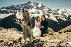 One very cheeky rodent photo bombs a couple's wedding photo. Darius Sutherland, founder of...