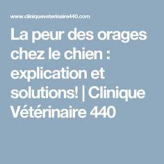 La peur des orages chez le chien : explication et solutions! | Clinique Vétérinaire 440