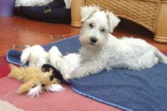 Charlie with his toys