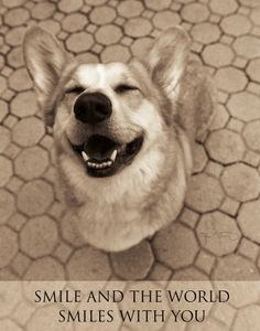 Unless you're a corgi... then the world is smiling AT you. Lbr.