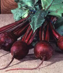 Beet Detroit Dark Red Great Heirloom Vegetable By Seed Kingdom BULK 1200 Seeds *** See this great product.