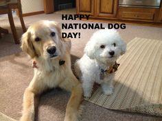 Aspen and Titus wish all their buddies a HAPPY #NATIONALDOGDAY! #DogDayCutestDog