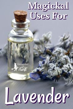 Lavender is such a magical herb. These magickal uses for lavender are perfect for any witch. Lavender is such a magical herb. These magickal uses for lavender are perfect for any witch. Lavender Plant Uses, Lavender Crafts, Lavender Benefits, Lavender Recipes, Herbal Witch, Witch Herbs, Magic Herbs, Herbal Magic, Essential Oil Uses
