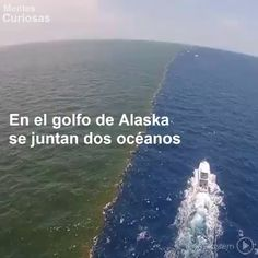 Las maravillas de la naturaleza. @Mentesoficial nos muestra este bello fenomeno natural en el Golfo de Alaska #IloveSpanish https://video.buffer.com/v/5886df0e9c1d345a63dfa90e