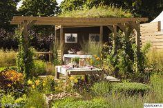 puutarha,köynnöskasvi,viherpiha