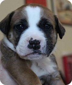 Adopt Michael on Akron ohio, Adoption and Dog cat