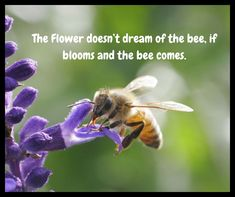 The Flower doesn't dream of the bee, if blooms and the bee come. Beautiful Flower Quotes, Beautiful Flowers, Flowers Nature, Flower Delivery, Floral Bouquets, Bee, Bloom, Photography, Flower Bouquets