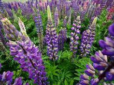 Stor guide til årsteppe/ temperaturpledd: Slik lager du det. Plants, Dinner Napkins, Plant, Planets