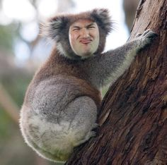 Lewis : Um, Sips face on a koala...