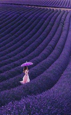 Lavender Garden, Lavender Blue, Lavender Fields, Lavender Flowers, Purple Flowers, Lavander, Purple Love, All Things Purple, Shades Of Purple