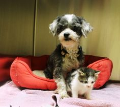 Dog Finds A Tiny Kitten, Risks Everything To Save Her