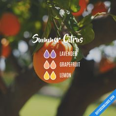 Summer Citrus - Essential Oil Diffuser Blend