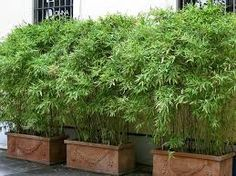 Image result for multiple, planters pots, landscaping,