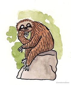 Sloth watercolors.