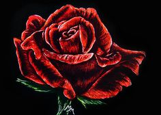 ACEO TW FEB Scratchboard Art RED ROSE Valentines Day Flower Garden Painting MMM #Miniature