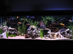 125 Gallon African Cichlid Tank- dream tank