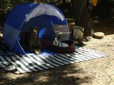 Tips for taking your dog on the next family camping trip!
