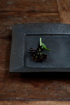 Flower Fritillaria 黒百合