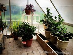 Winter Houseplant Care - Follow these winter houseplant care tips from the experts at HGTV to enjoy indoor gardening success.
