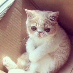 Sad kitten!