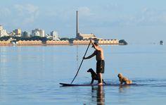 Levando os cachorros para passear no Rio Guaiba em Porto Alegre - RS