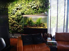 Chameleon set up with a fish tank! Sold!