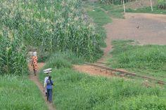Mulheres caminham por um  campo de milho perto de trilhos abandonados de ferrovia em Kumasi, Gana.  Fotografia: Adam Jones, Ph.D. no Flickr.
