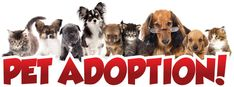 IMPORTANT INFO ABOUT ADOPTION DAYS….