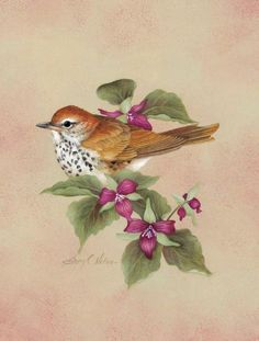"""""""I like the idea of taking off like a bird. Beautiful bird painting, signed by artist. Images Vintage, Image Nature, Bird Illustration, Illustrations, China Painting, Bird Drawings, Watercolor Bird, Little Birds, Bird Prints"""