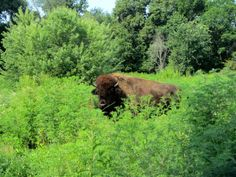 11. Buffalo Rock State Park