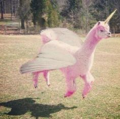 jumping lama- i have a weird obsession with llamas and alpacas lol Alpacas, Animal Captions, Animal Memes, Animal Humor, Baby Animals, Funny Animals, Cute Animals, Lama Animal, Llama Alpaca