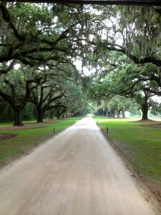 Look Familiar anyone? Gone With The Wind, The Notebook, North and South, and more movies have been filmed here! The Avenue of Oaks at Boone Hall Plantation