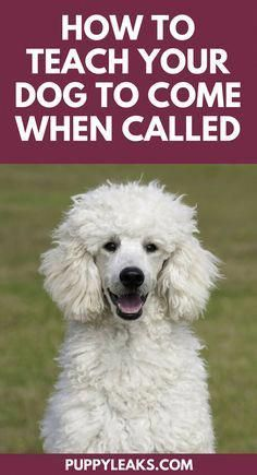 Please Click Here For More Info On How To Train Your Dog For
