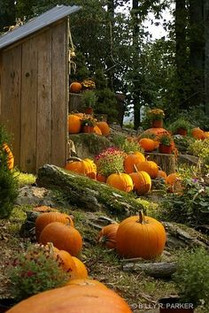 Pumpkins are here! Who's excited?