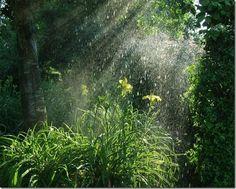 Lindas fotos da chuva (9)